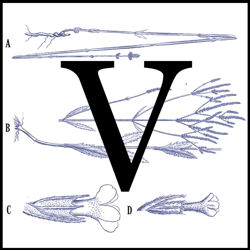 logo-V-web